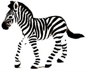 cebra